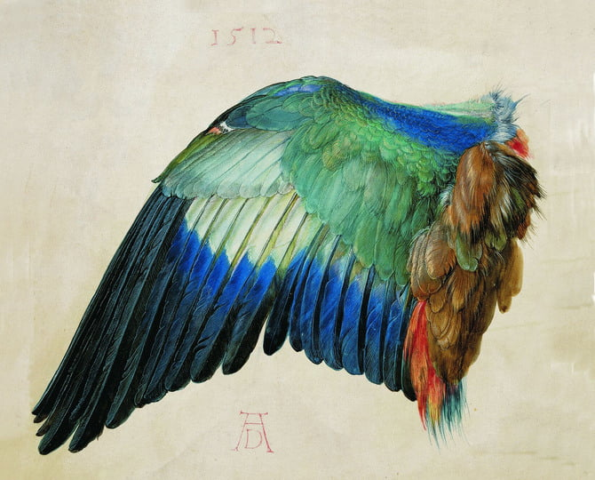 historia-técnica-acuarela-alberto-durero-Wing-of-a-Blue-Roller.